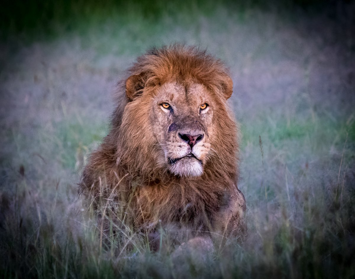 fotosafari i Masai Mara