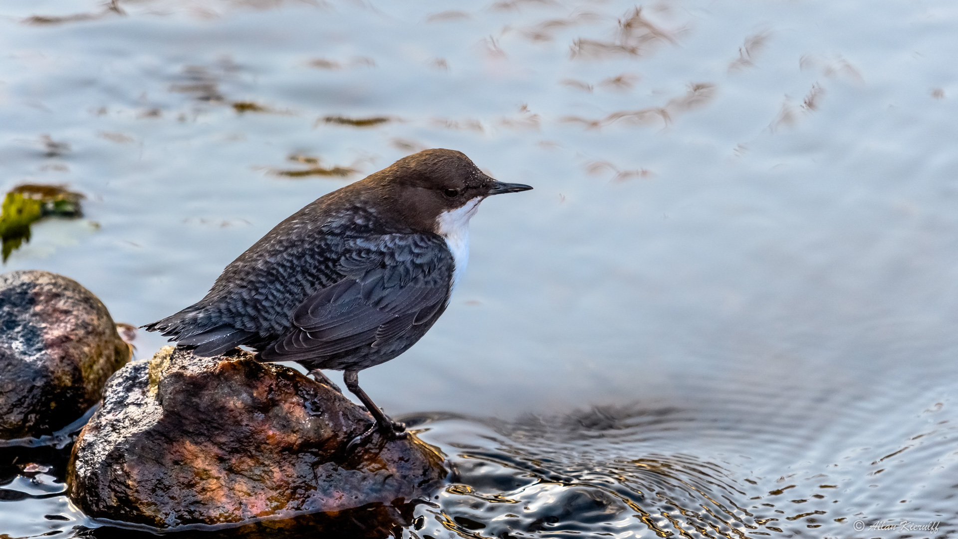 vandstaerene-i-raadvad-livet-ved-floden-10