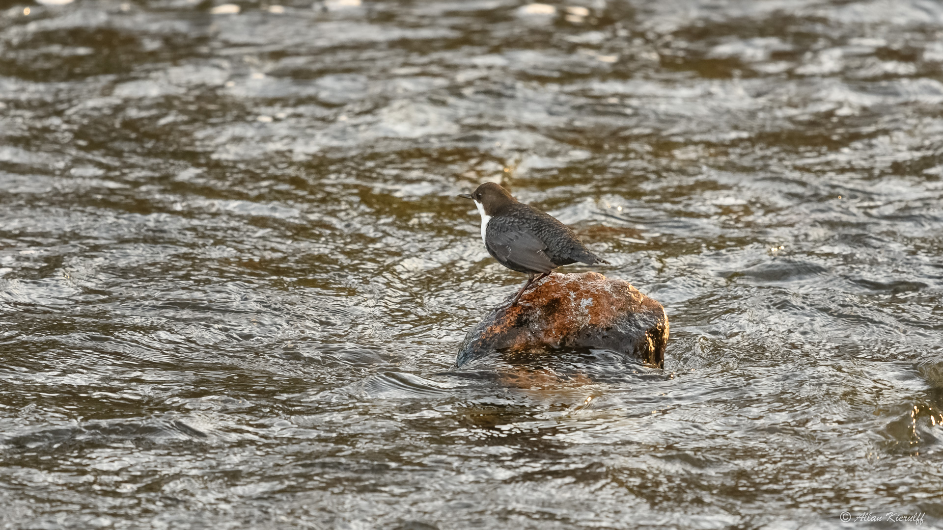 vandstaerene-i-raadvad-livet-ved-floden-14