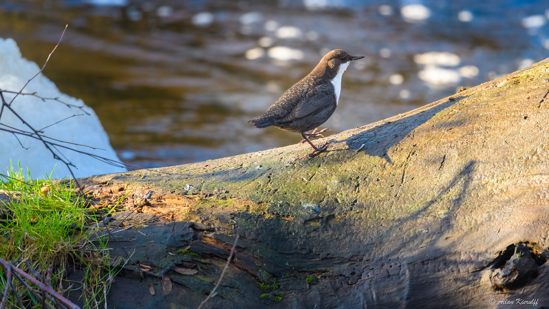 vandstaerene-i-raadvad-livet-ved-floden-8