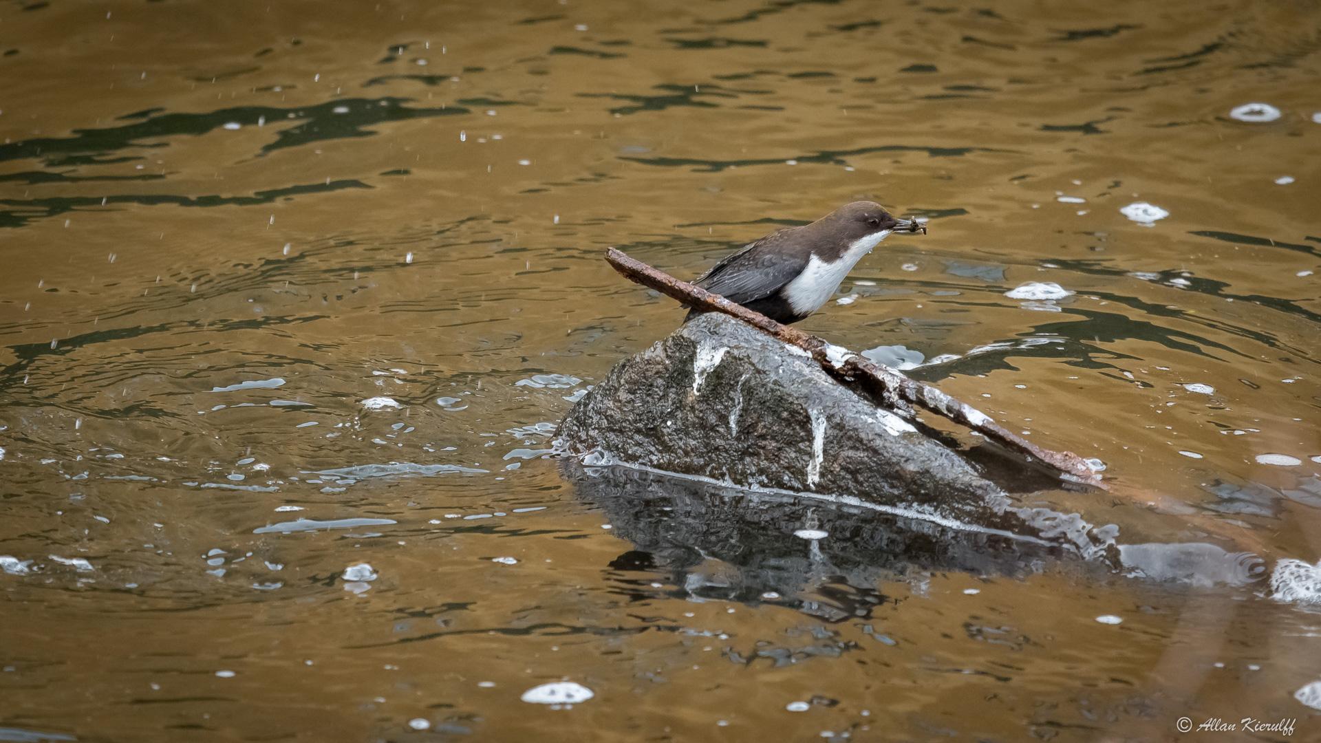vandstaerene-i-raadvad-livet-ved-floden